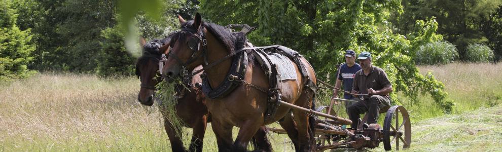Fauchage à cheval par Gilles Marty et Frédéric Destailleur - Chevaux : Edmon et Odilon - dans le Parc de La Vallée aux Loups / Yvelynes (78) France